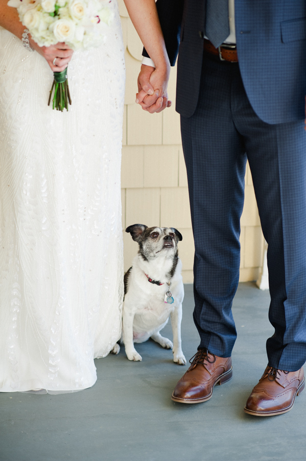 6-dog-with-bride-and-groom